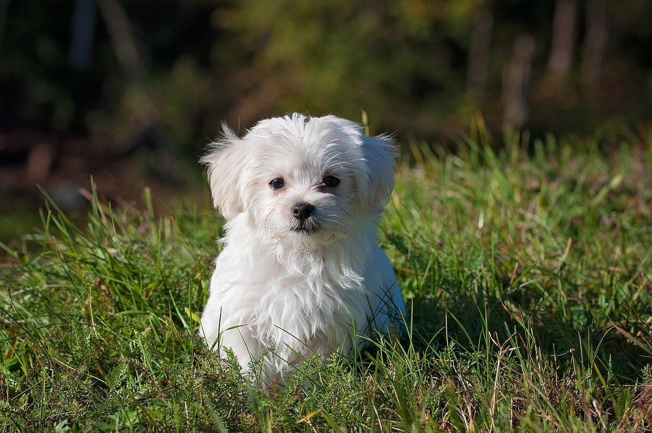 assurance-petit-chien